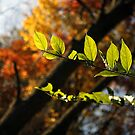 Fall is in your grasp by Erik Anderson