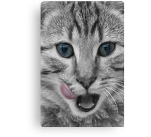Tabby Cat Licking its Lips Canvas Print