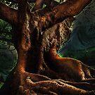 Ficus Macrophylla by David Rozansky