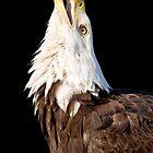 Screaming Eagle by Janet Fikar