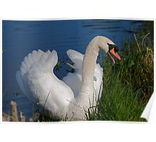 Mr Swan @ Magra Poster