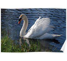 Mr Swan Again Poster