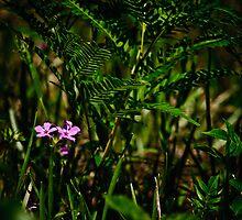 Wild Pink and Western Brackenfern by Phillip M. Burrow