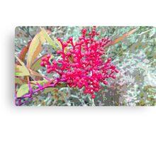 winter acacia ( fuchsia ) Canvas Print