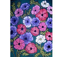 Many Coloured Anemones Photographic Print