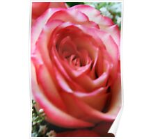 Anniversary Rose. Poster