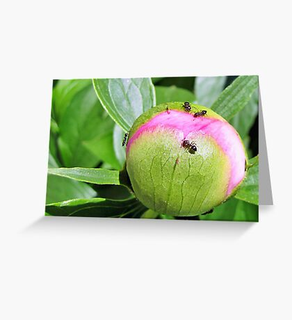 Before the Bloom... Greeting Card
