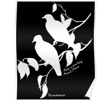 White Rose-crowned fruit dove Poster