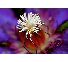 Flower Fireworks Photographic Print