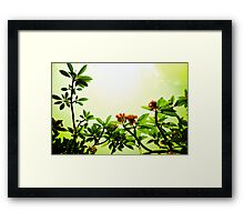 In the Blossom Mood of Spring. Framed Print