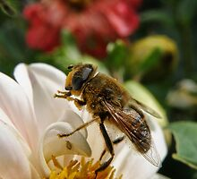 Beeeeautiful by Elaine Game