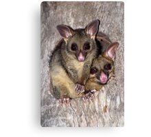 Coco and Yoyo - Australian Possum and Her Baby Canvas Print