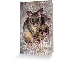 Coco and Yoyo - Australian Possum and Her Baby Greeting Card