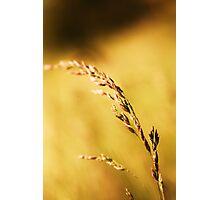 Golden blade Photographic Print
