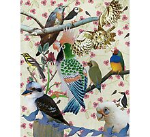Pretty Birdies Photographic Print