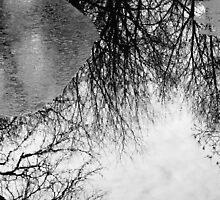 Reflection by Darrick Bartholomew