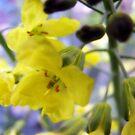 Yellow simplicity by Katarina Kuhar