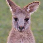 Fuzzy Ears by Rochelle Buckley