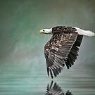 Bald Eagle in mist. by Tarrby
