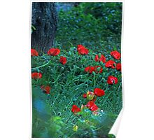 The Brightest Poppies Ever Poster