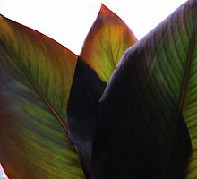 Canna Beleaf by Michael May