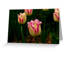 Frilly Tulip (Spring Bulbs) Greeting Card