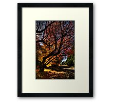 Out On A Limb - Leura , Blue Mountains - The HDR Experience Framed Print