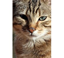Here's Looking at You - Portrait of a Tabby Cat Kitten Photographic Print