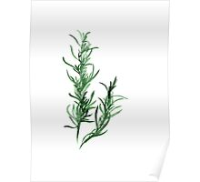 Tarragon watercolor art print Poster