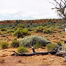 Watarrka National Park by Christopher Biggs