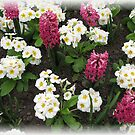 Hyacinths and Primroses Rectangular Vignette by BlueMoonRose