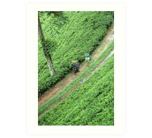 tea plantation Art Print