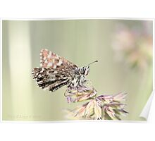 Grizzled Skipper, pyrgus malvae Poster