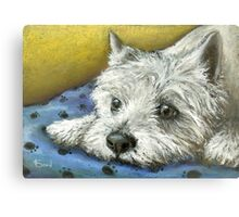 Daydreaming Westie Canvas Print