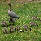 Ten little ducks... by Elaine Game