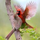 When Cardinals Kiss by Gary Fairhead