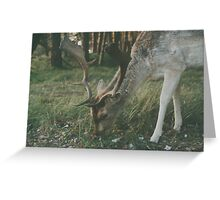 Deer in the woods searching for food Greeting Card