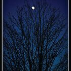 Blue Moon Tree - Amherst Nova Scotia by ateneyck