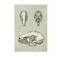 rabbit skull Art Print