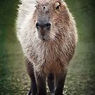 Capybara by Lissywitch