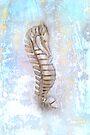 Little Seahorse by CarolM