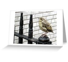116 - BABY THRUSH (D.E. 2010) Greeting Card
