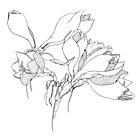 Amaryllis Blooms by Rachel Slepekis