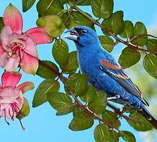 Blue Grosbeak by Bonnie T.  Barry