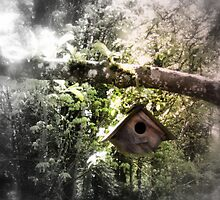 bird house in the apple tree by Dawna Morton