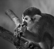 Hungry Little Chap by Ryan Davison Crisp