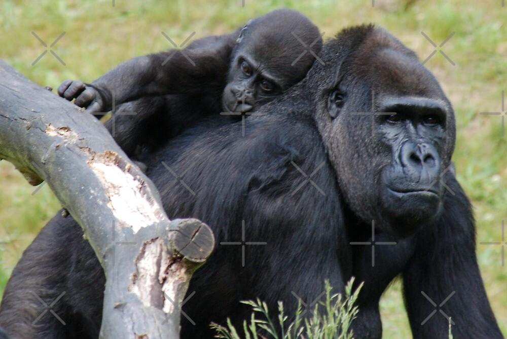 Gorilla Love by ApeArt