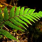 Fern leaf, Franz Josef, New Zealand. by Michael Schön