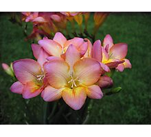 Rochelle's Freesia Photographic Print