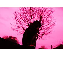 Pink dreams, yet only 9 lives Photographic Print